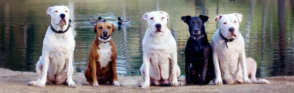 Lori Fusaro: Dogs