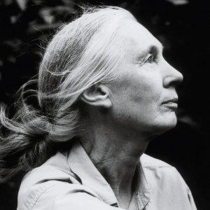 Jane Goodall img01