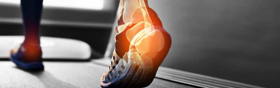 Bones in the foot