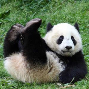 Где Панда? img01